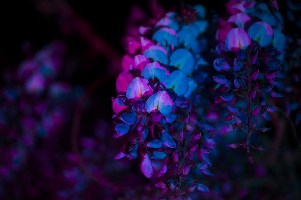 nightflowers-7.jpg