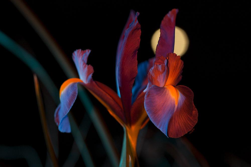 nightflowers-9.jpg