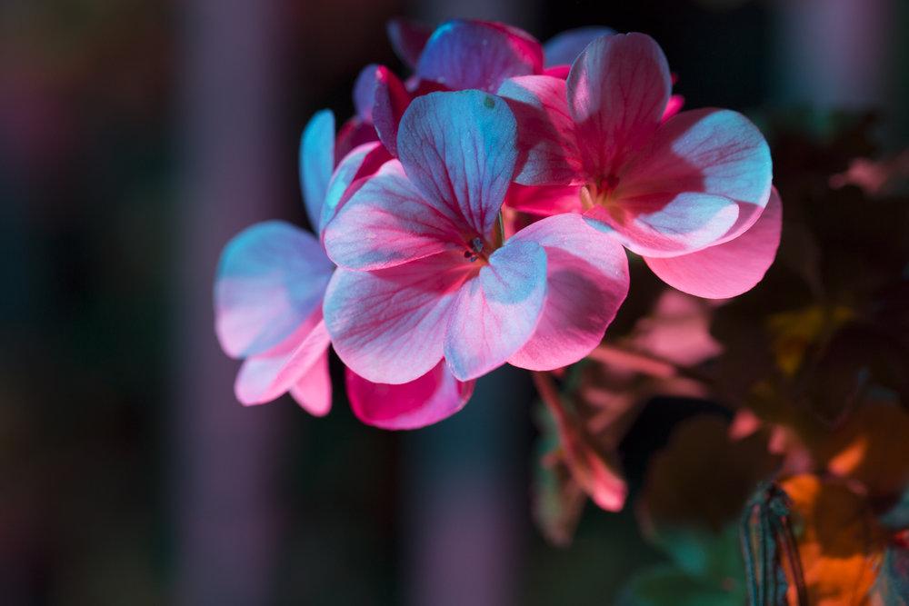 nightflowers-11.jpg