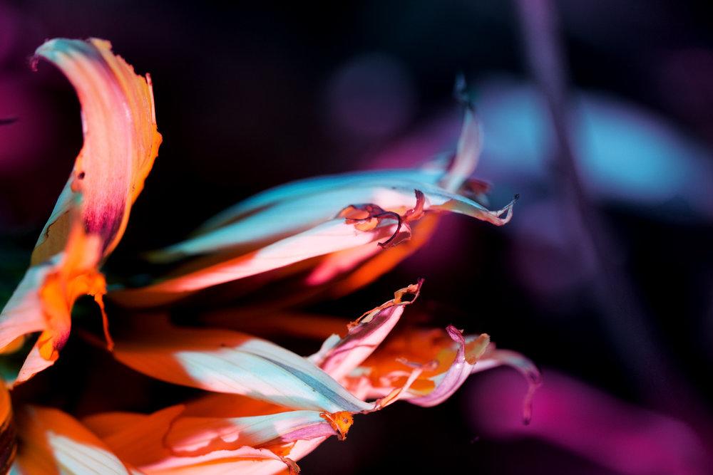 nightflowers-10.jpg