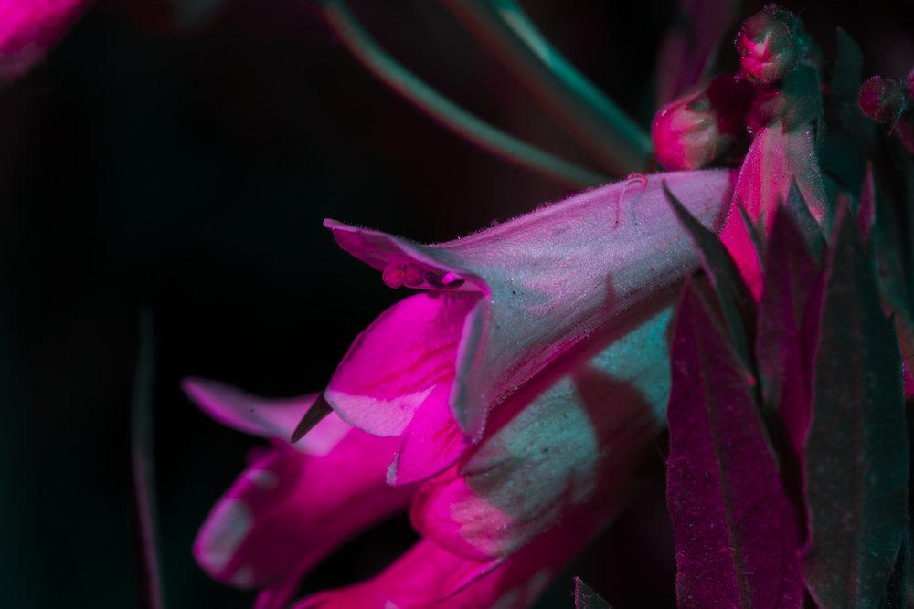 nightflowers-14.jpg