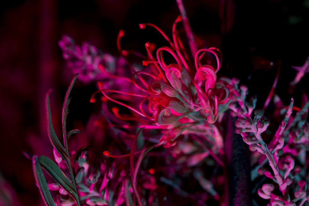 nightflowers-13.jpg