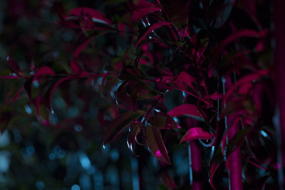 nightflowers-16.jpg