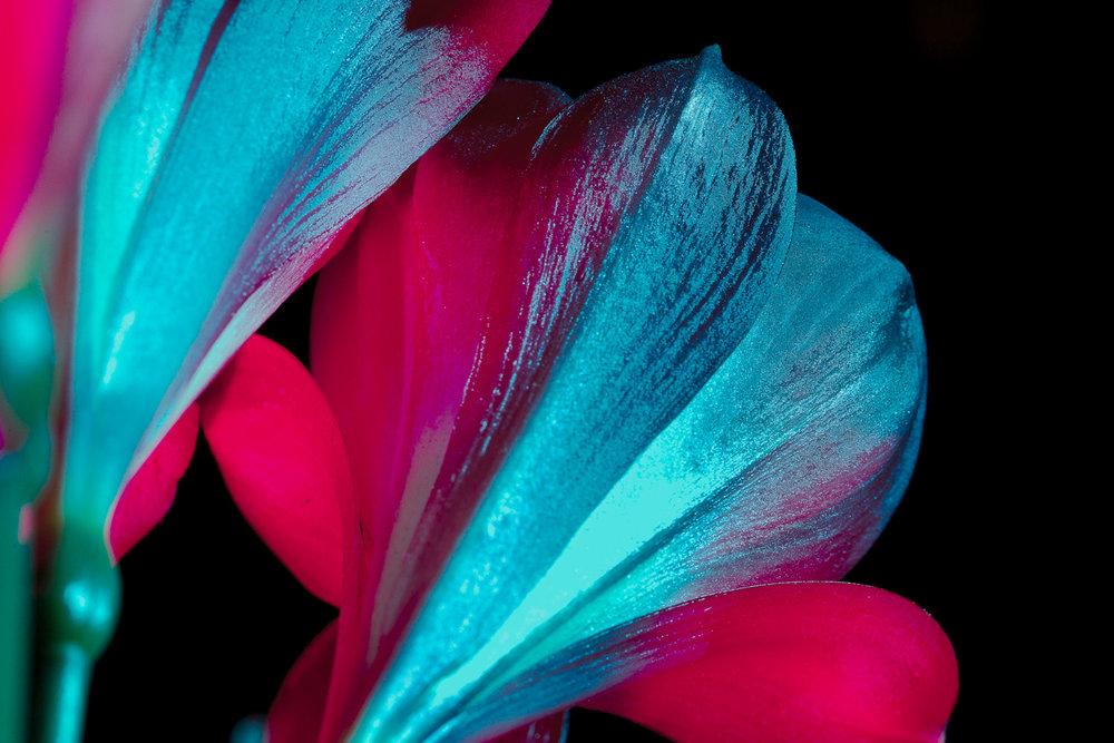 nightflowers-20.jpg