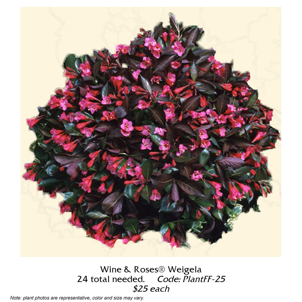 wine and roses weigela.jpg