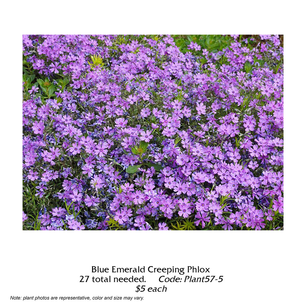 blue emerald creeping phlox.jpg