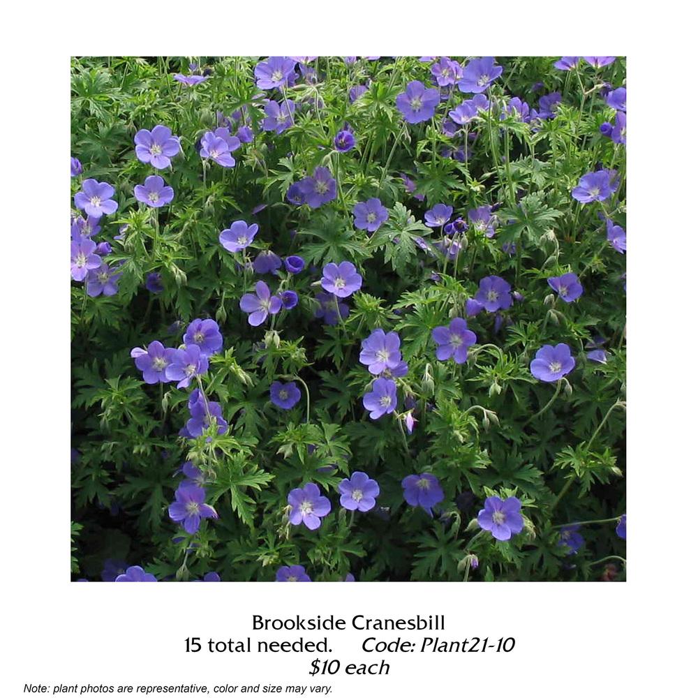 Brookside Cranesbill.jpg
