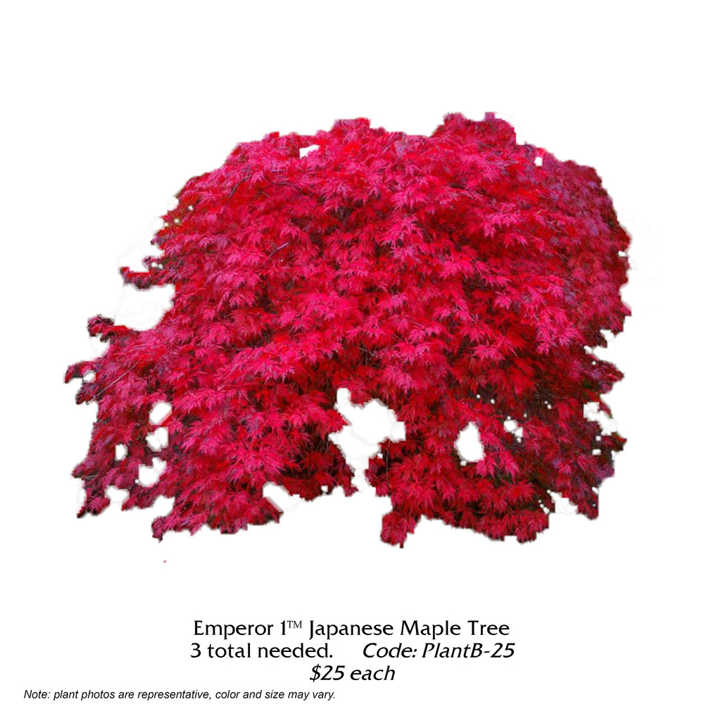 Emperor Japanese Maple.jpg