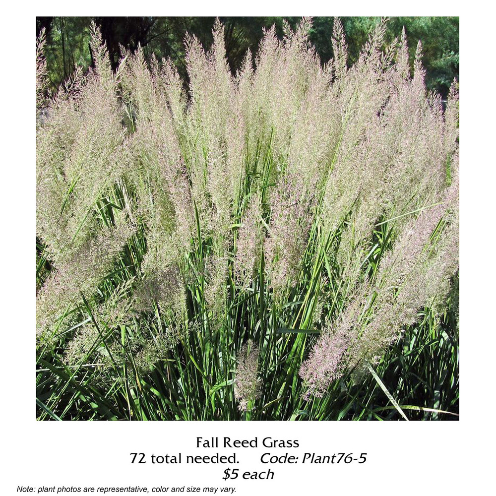 fall reed grass.jpg