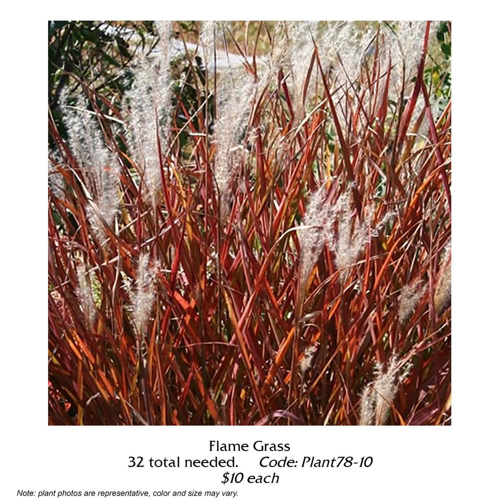 flame grass.jpg