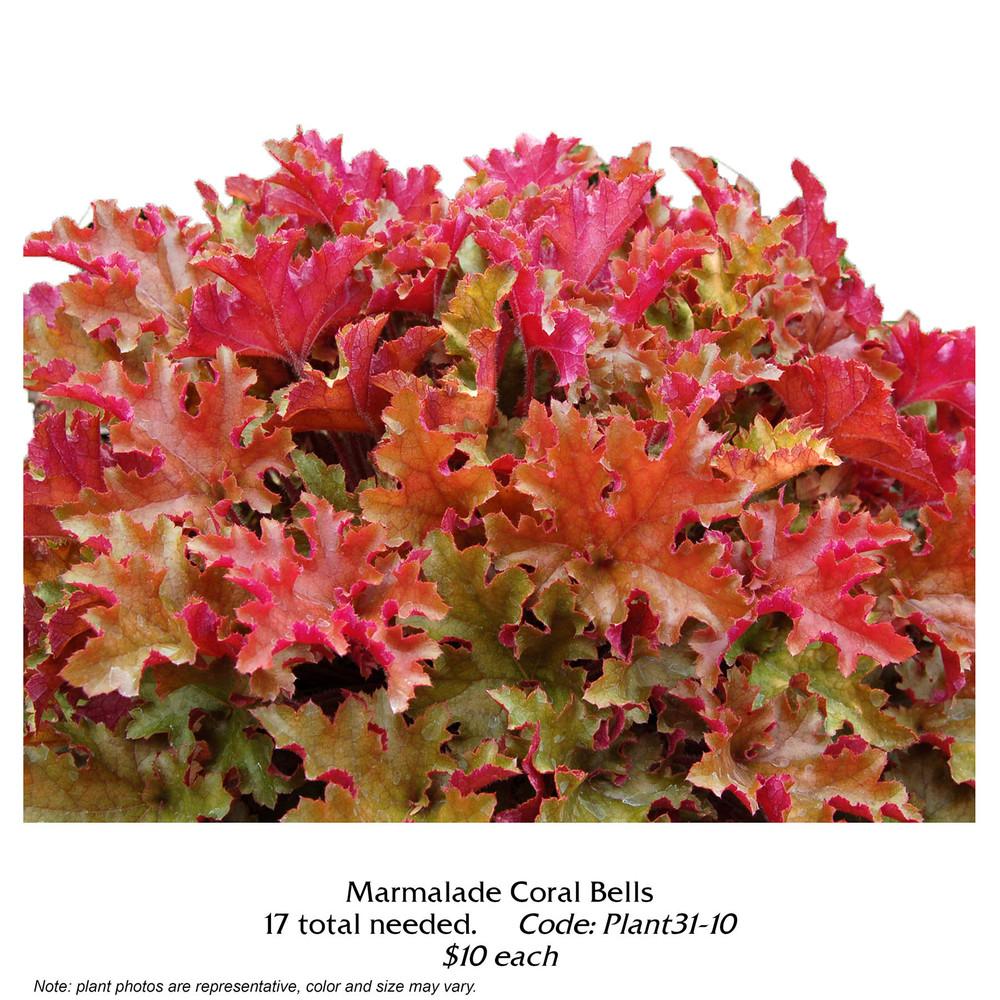 Marmalade Coral Bells.jpg