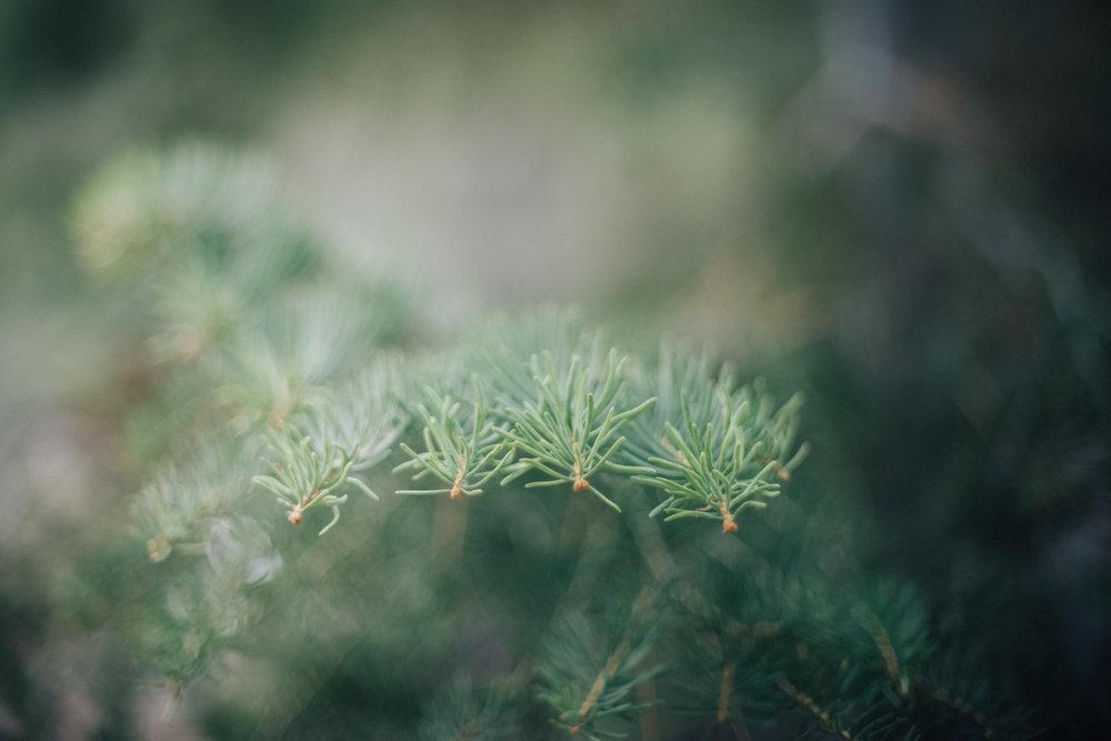 macro photography, nature photography, nature, photography