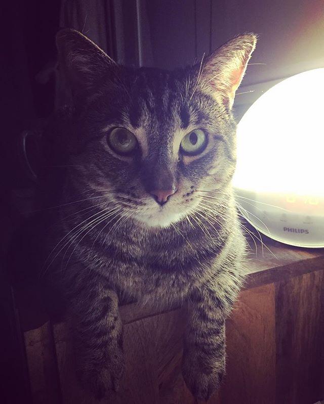 Morning kitty 😻😻 #catsofinstagram #catalarmclock