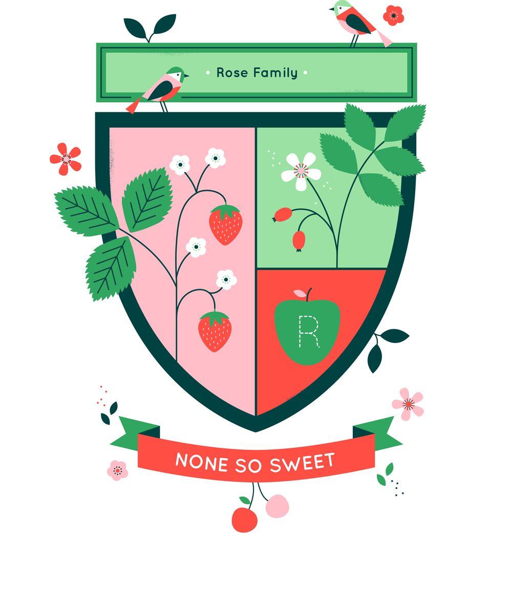 hannah+holly-illustration-cambridgeuniversitybotanicgarden-plantfamilies-crests-badges-rose-strawberry.jpg