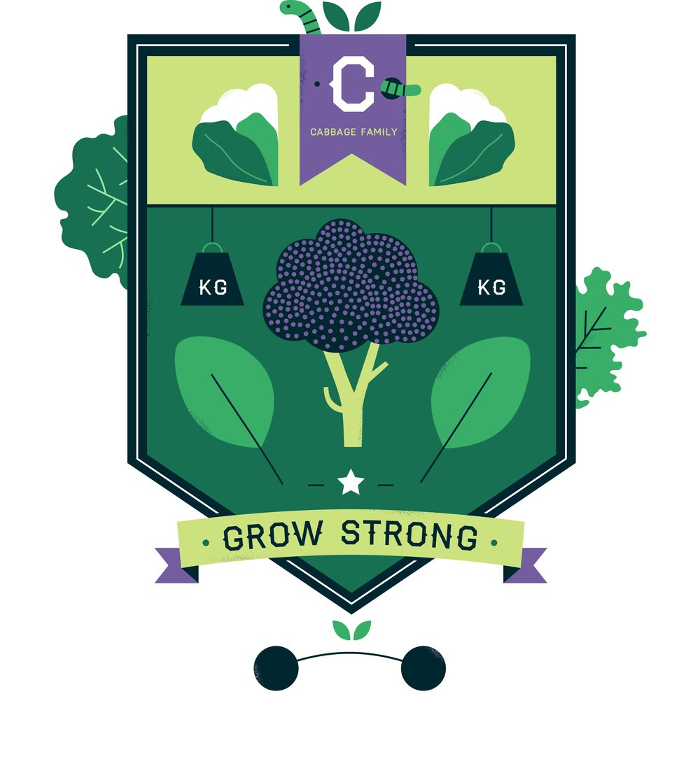 hannah+holly-illustration-cambridgeuniversitybotanicgarden-plantfamilies-crests-badges-cabbage.jpg