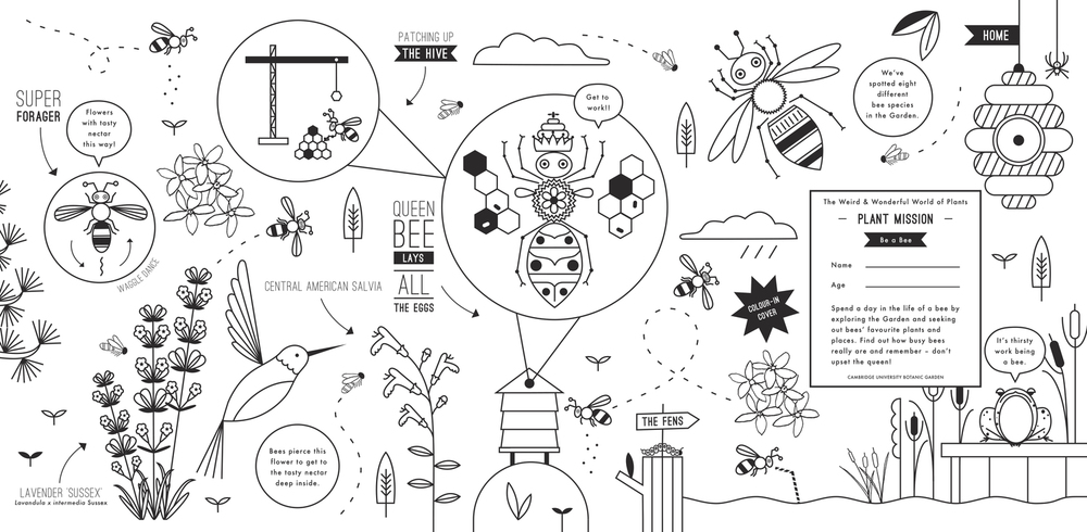 hannah+holly-illustration-theweirdandwonderfulworldofplants-cambridgeuniversitybotanicgarden-summer-trails-plants-facts-guides-children-activities-colour-in-cover-bees.jpg