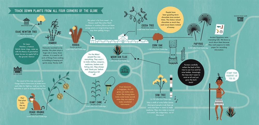 hannah+holly-illustration-theweirdandwonderfulworldofplants-cambridgeuniversitybotanicgarden-summer-trails-plants-facts-guides-animals-map.jpg