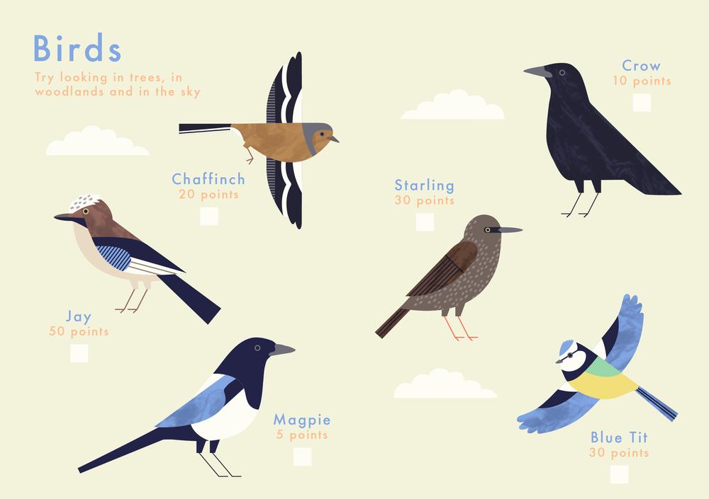 Know+tell-illustration-cambridgeuniversitybotanicgarden-findme-plant-trail-children-birds.jpg