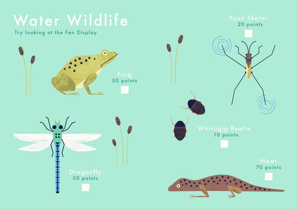 Know+tell-illustration-cambridgeuniversitybotanicgarden-findme-plant-trail-children-waterwildlife.jpg