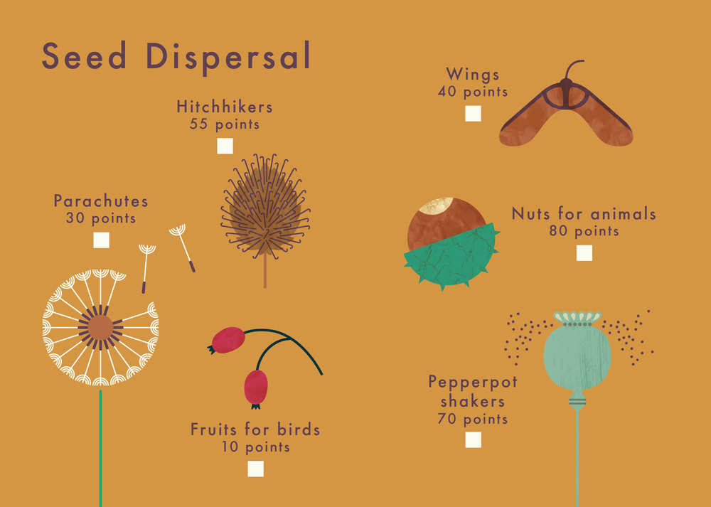 know+tell-find me 2 plant spotting guide-illustration-education-design-08-08.jpg