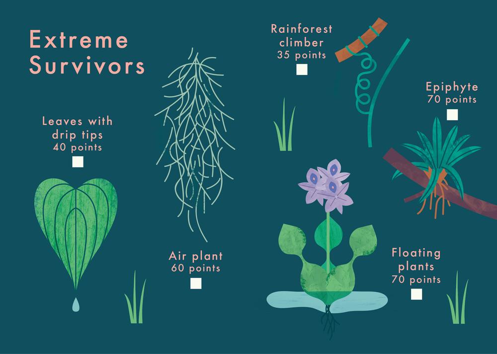 know+tell-find me 2 plant spotting guide-illustration-education-design-08-04.jpg