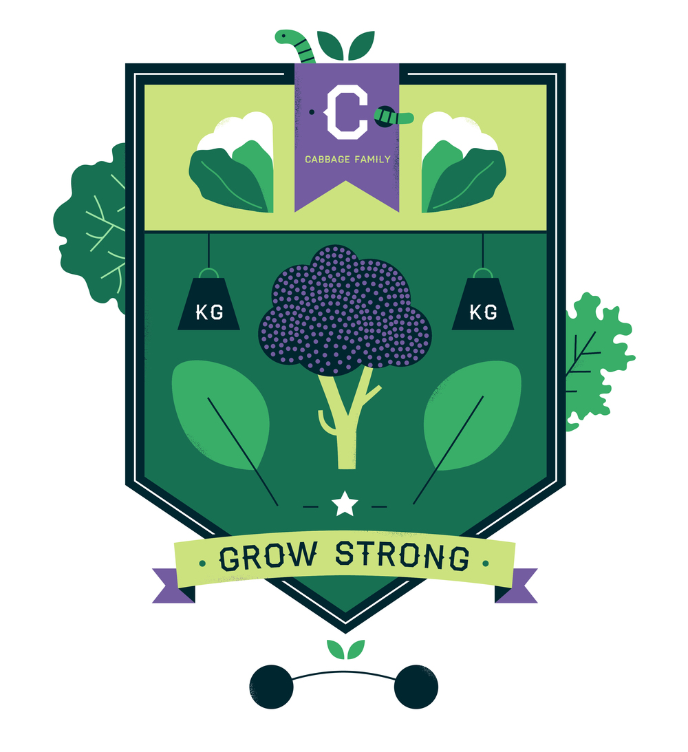 know+tell-illustration-cambridgeuniversitybotanicgarden-plantfamilies-crests-badges-cabbage-02.jpg