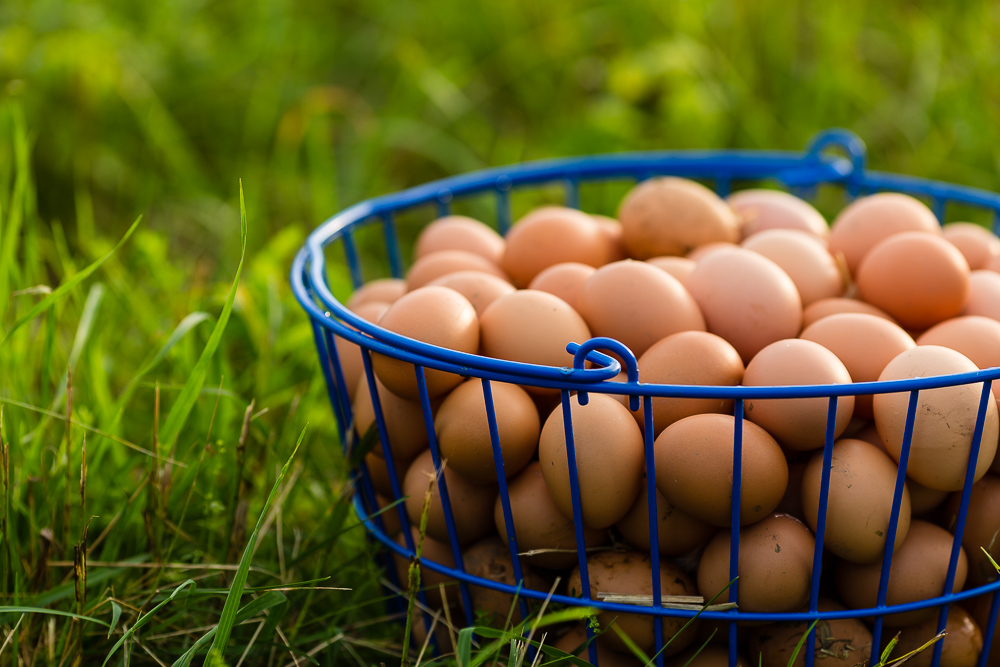 There is nothing like farm fresh eggs... you can taste and see the difference.