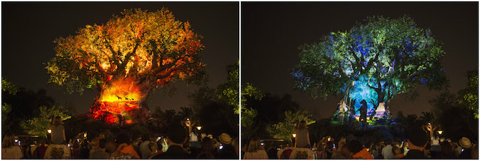 Tree of Life nighttime show at Disney's Animal Kingdom Park