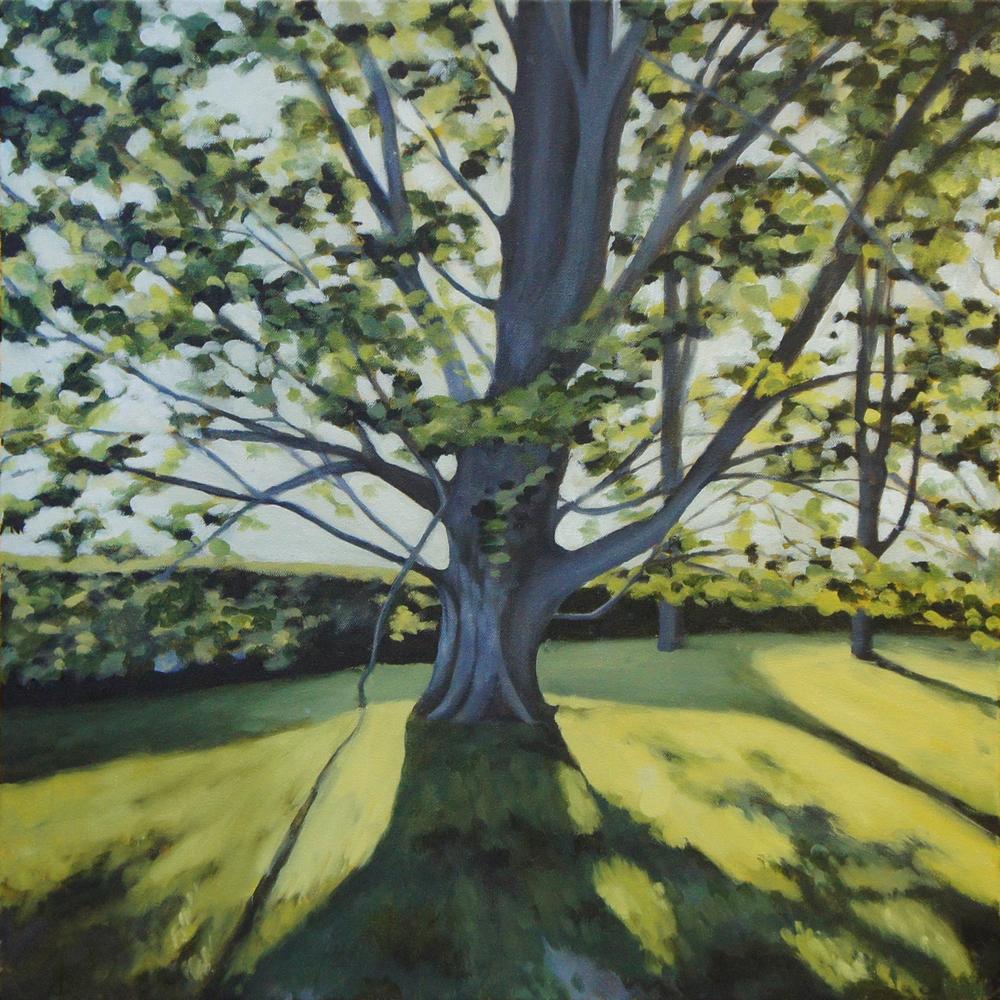 beech_tree_lo.jpg