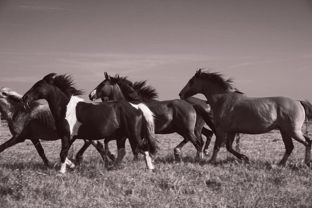 Garzon Horses