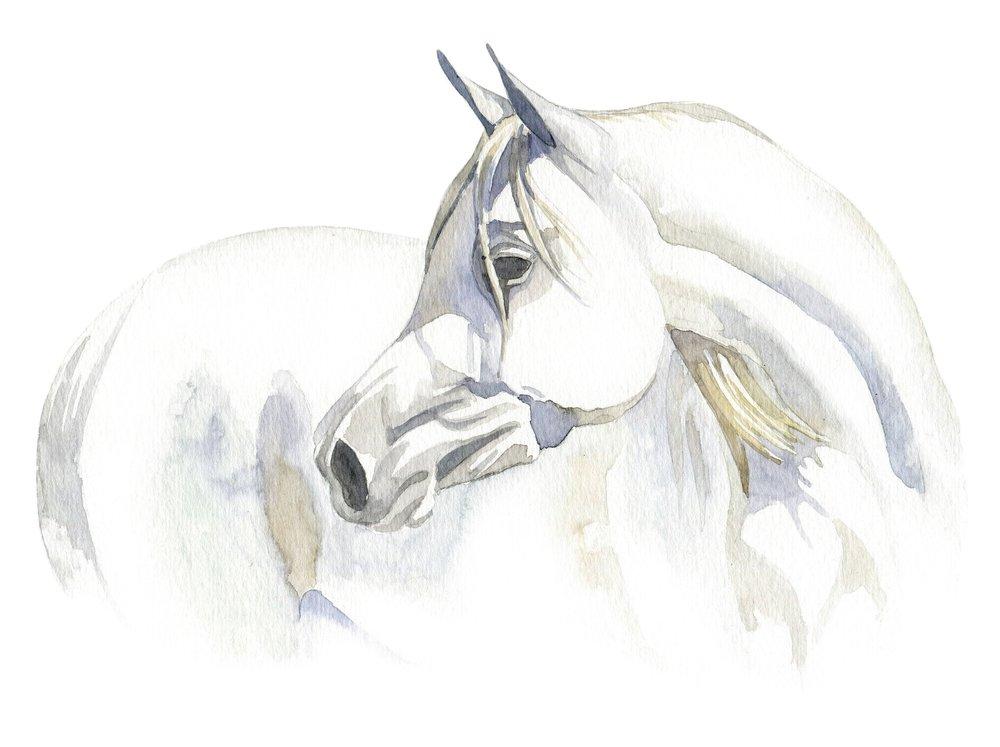 white_horse.jpg