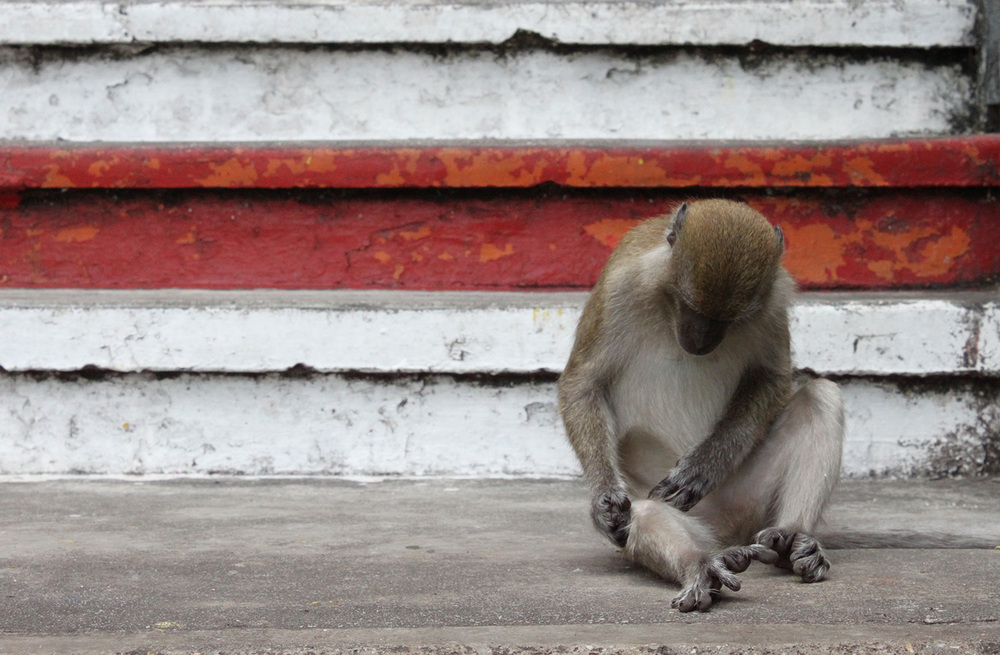 monkey_stairs.jpg