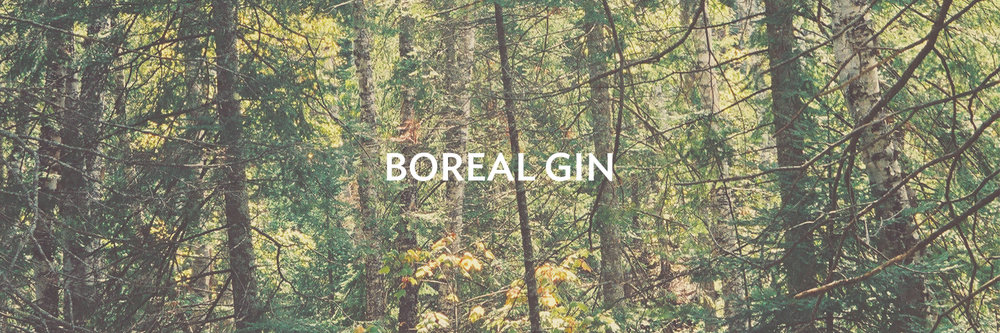 Boreal Gin