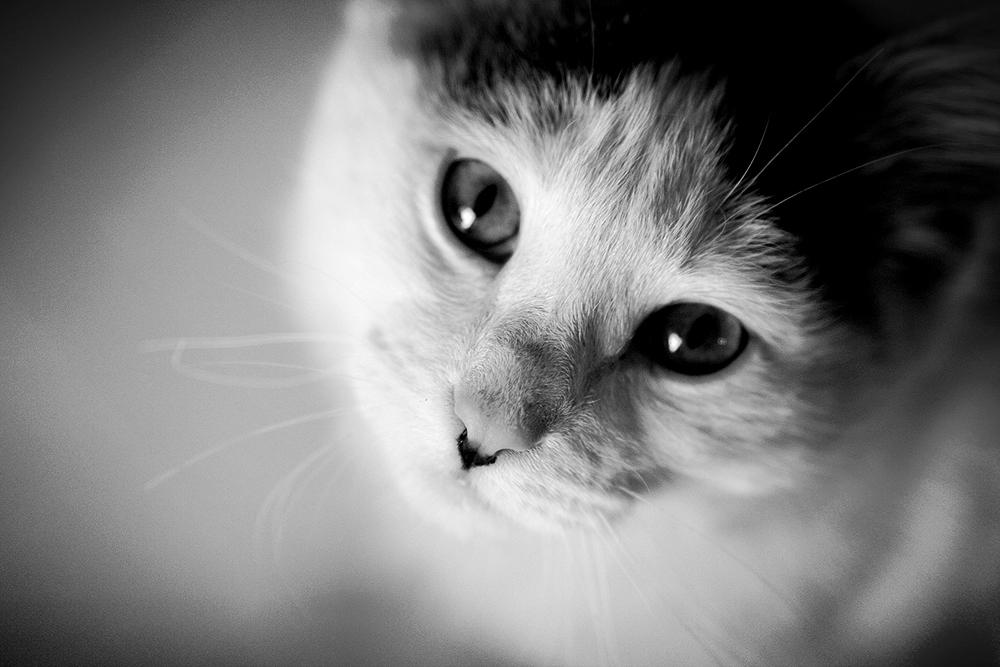 Cat_Cute.JPG