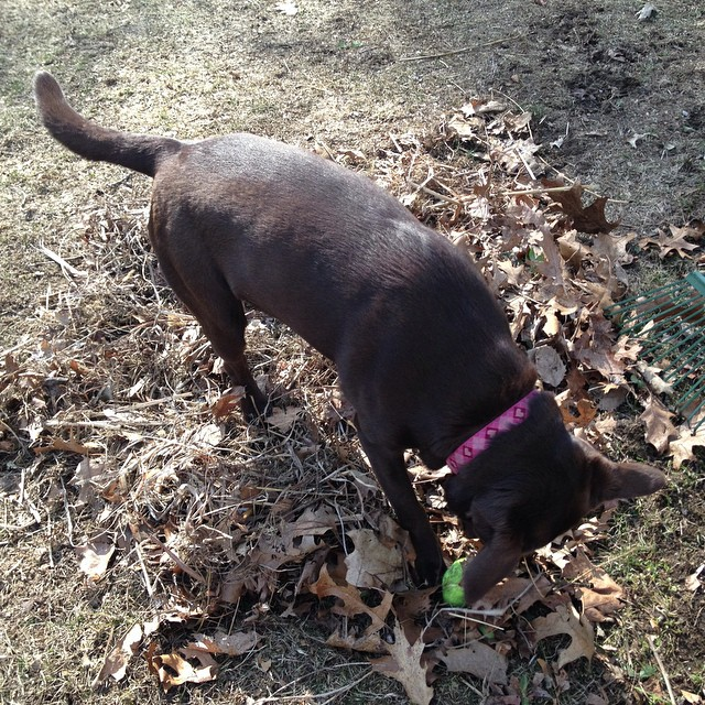 Freaky raked leaf piles are fun to play in!