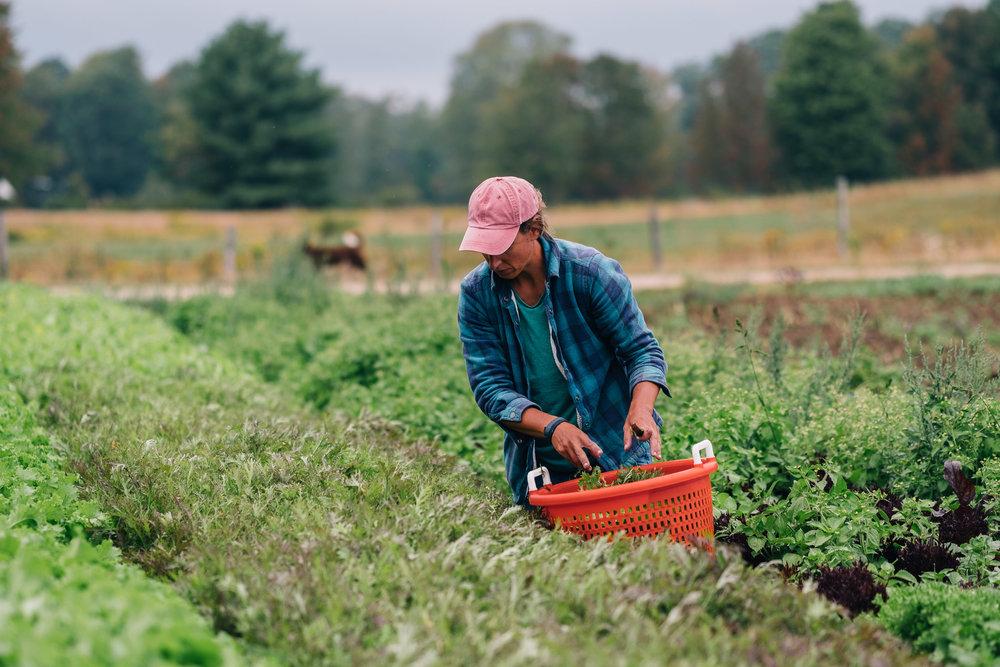 Bumbleroot Farm_091517 (1 of 1)-17.jpg