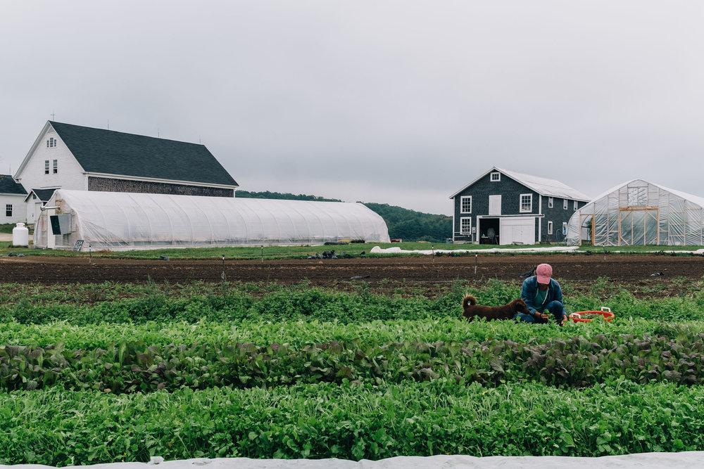 Bumbleroot Farm_091517 (1 of 1)-31 (1).jpg