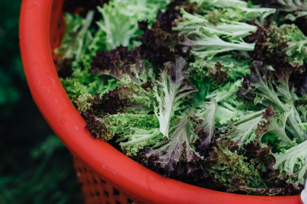 Bumbleroot Farm_091517 (1 of 1)-15.jpg