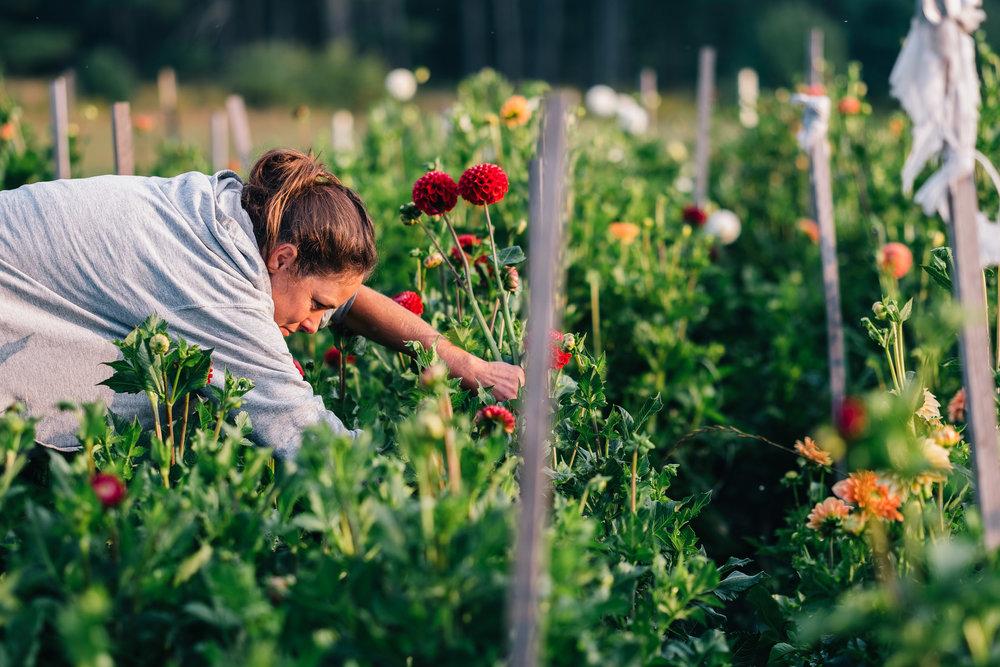 Bumbleroot Farm_091517 (1 of 1)-20.jpg