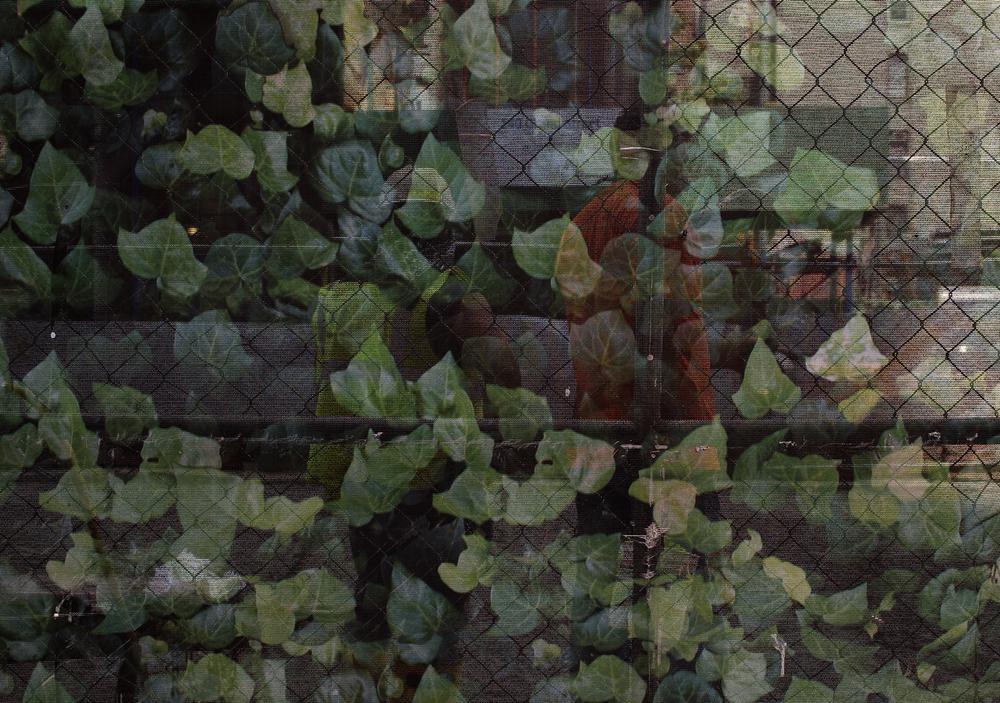 Leaves-Bro.jpg