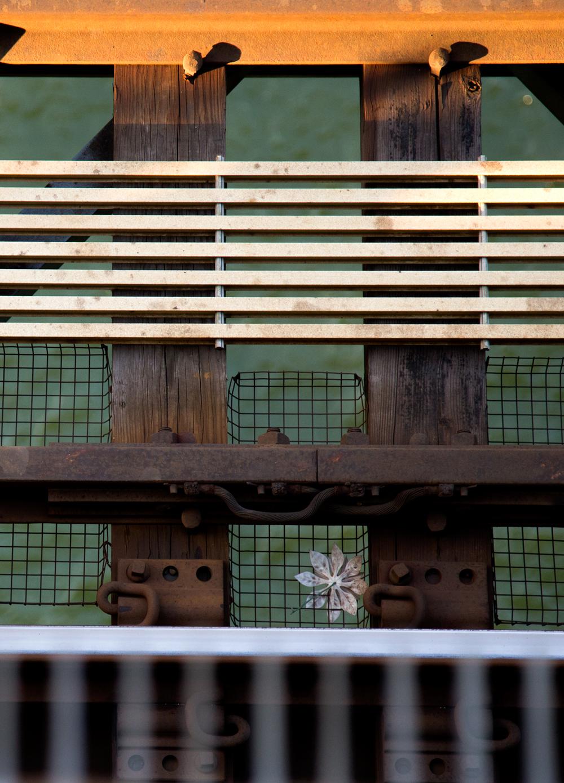 Train-Flower-Cropped.jpg
