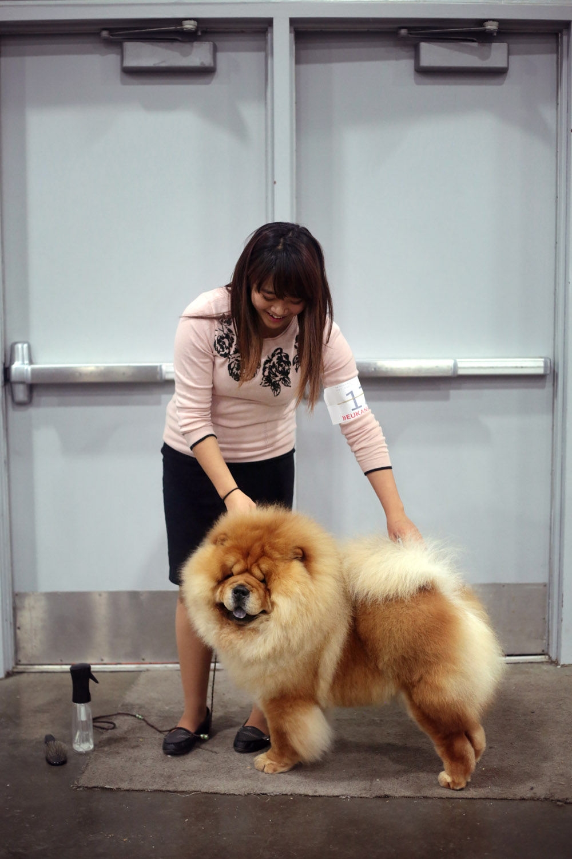 150117.aam.dogshow_0113_EDIT.jpg