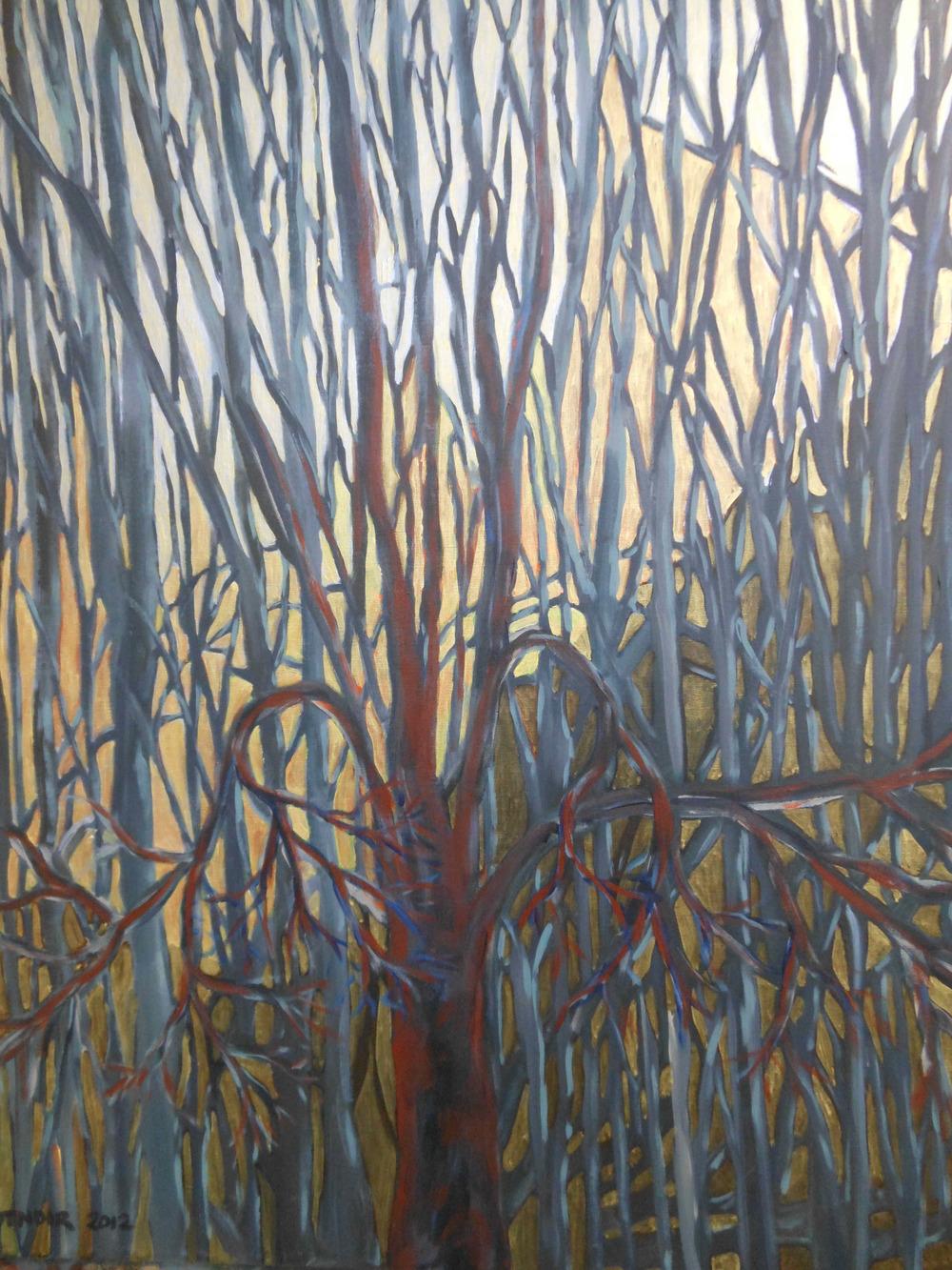 Grey Trees at Dusk