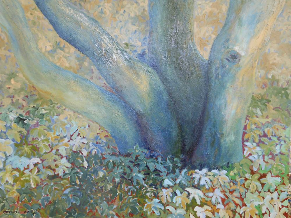 Tree in Pachysandra
