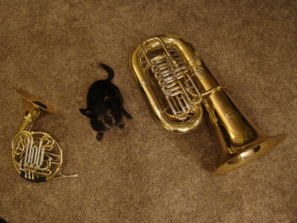 Gizmo & Horns, part II