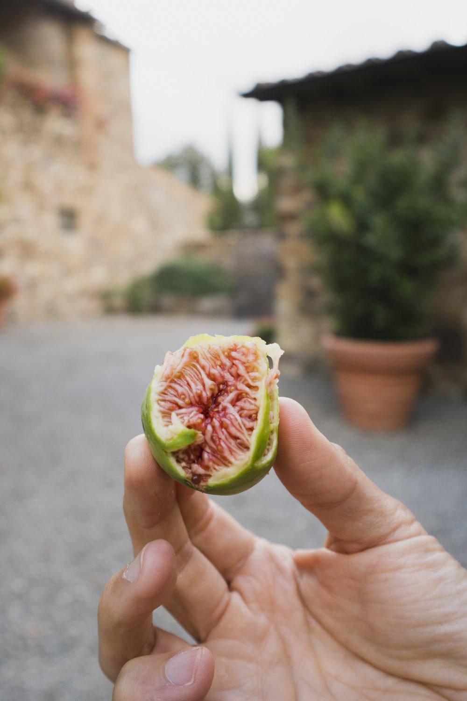 O_Italy-Tuscany-439.jpg