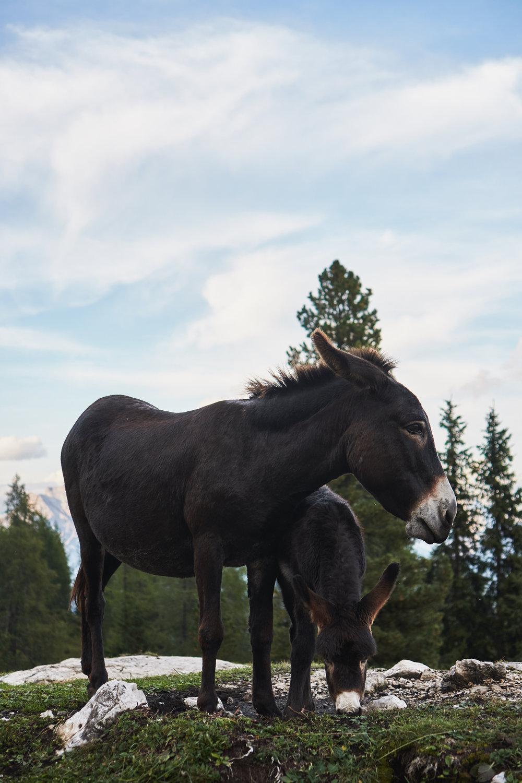 201809_Dolomites-353.jpg