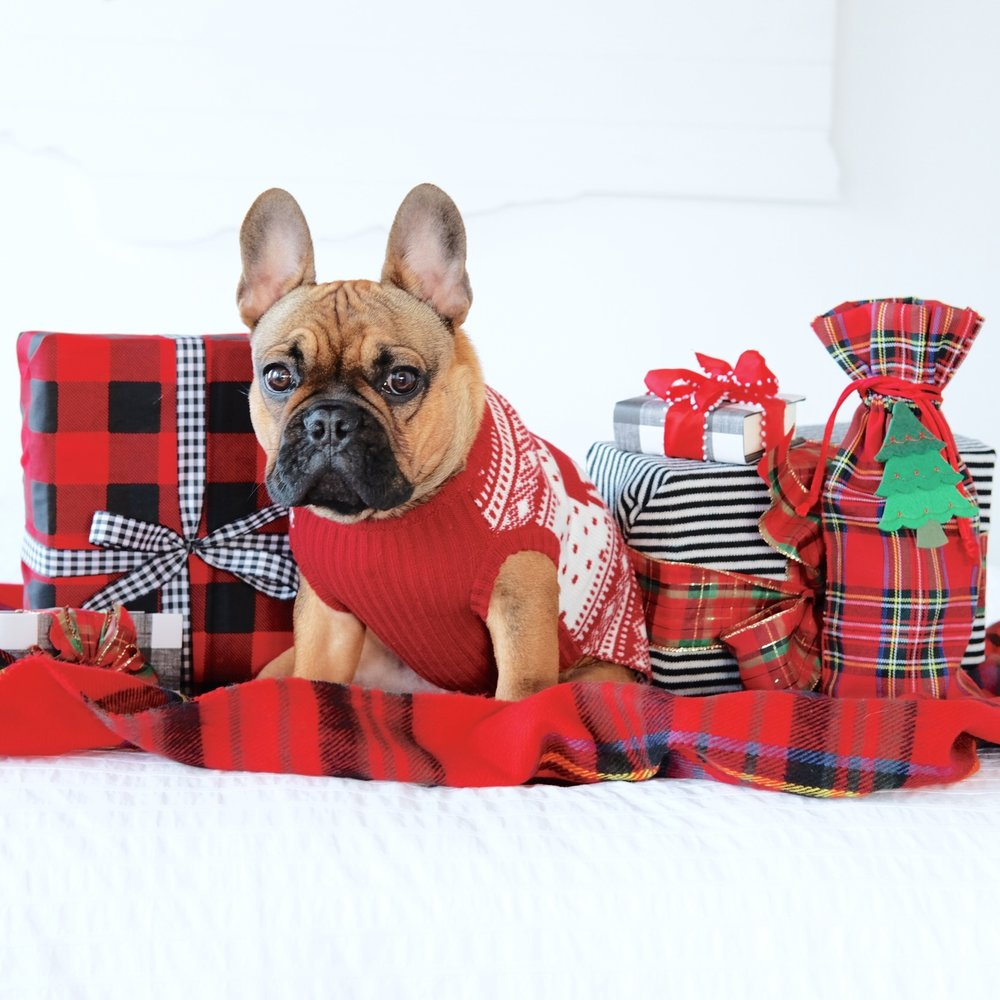 Plaid gift wrap, french bulldog puppy, cue holiday sweater for dogs.