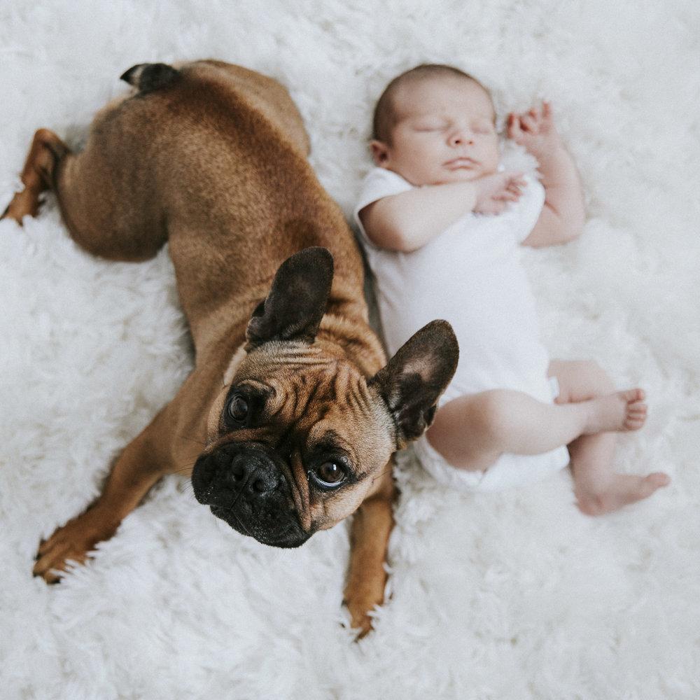 Neutral nursery.  Black and white nursery.  Baby boy and french bulldog.