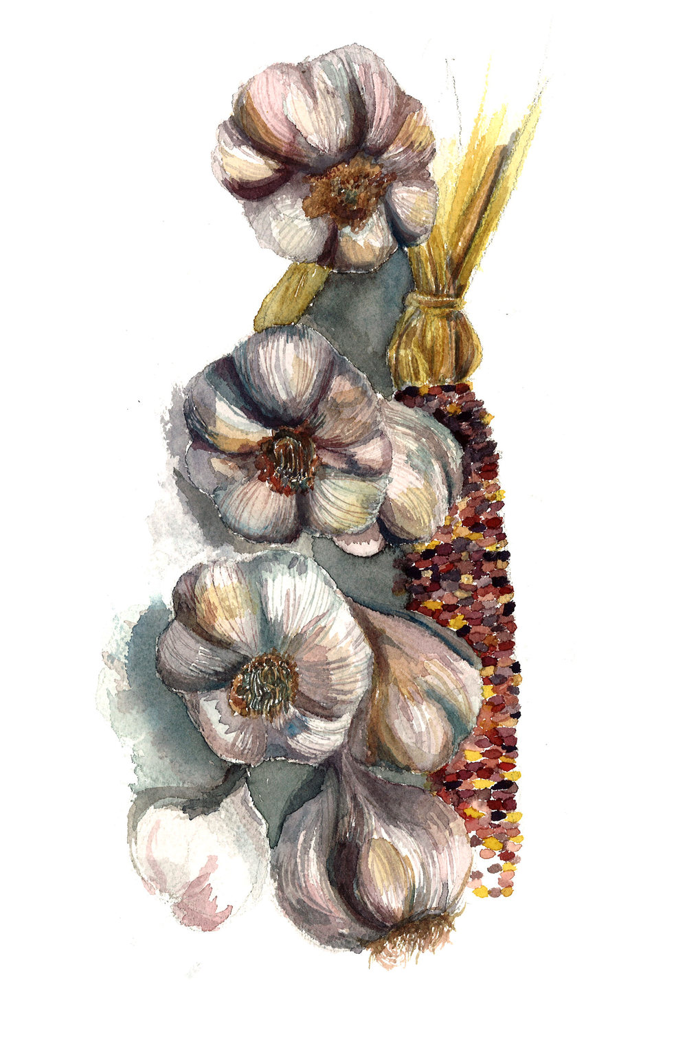 garlic_illustration.jpg
